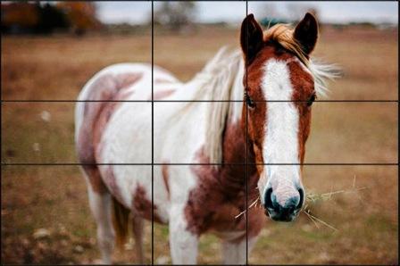 10 002 Важные правила композиции в фотографии